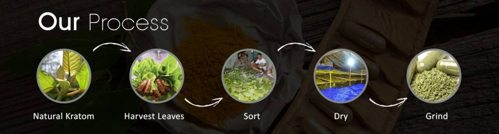 Our Kratom Process