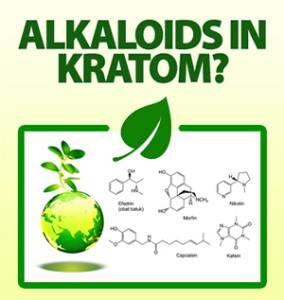 Mitragynine: The Most Active Alkaloid Found in Kratom