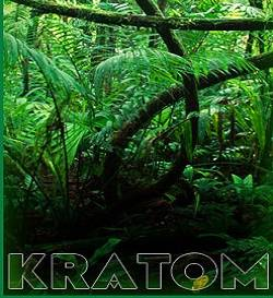 Who Should Not Use Kratom?