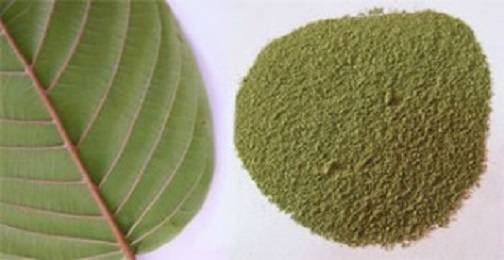 Effective Kratom Strains for Pain Relief